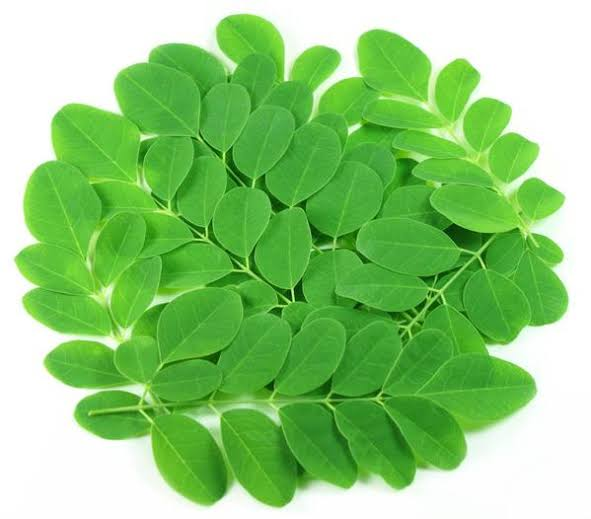 Health Benefits Of Moringa - Health Perfecto
